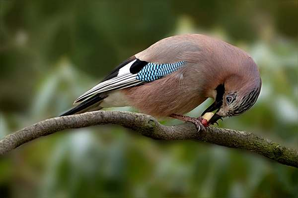 Umwelttag Vogelzählung